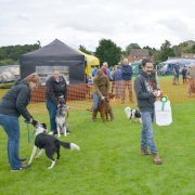 image of dersingham fun day dog show