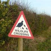 image of wildlife warning sign